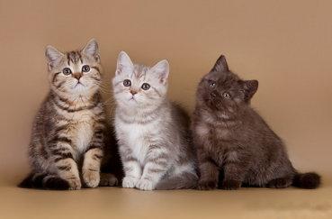 Котята разного окраса