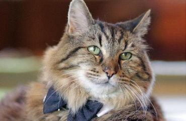 Средняя продолжительность жизни котов