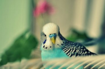 Пестрый светло-голубой попугай