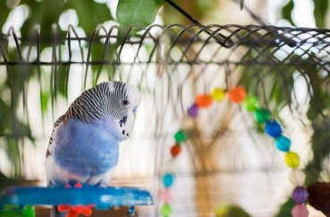 Клетка для попугая с игрушкй