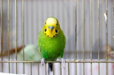 Открытая клетка для птиц