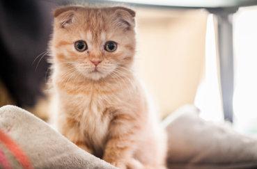 Рыжий кот на фотографии