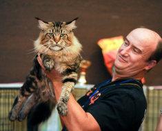 Большой кот на руках у хозяина