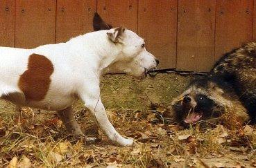 Пес на охоте