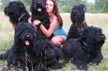 Владелец и его собаки