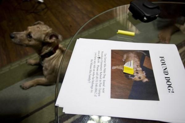 фото найденной собаки вместе с объявлением