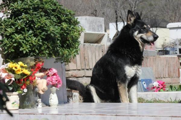 фото собаки рядом с цветами