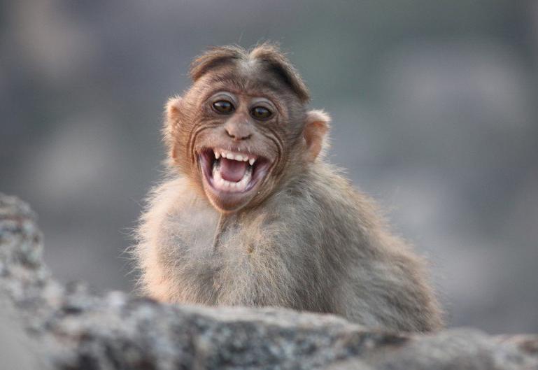 Улыбающаяся обезьянка