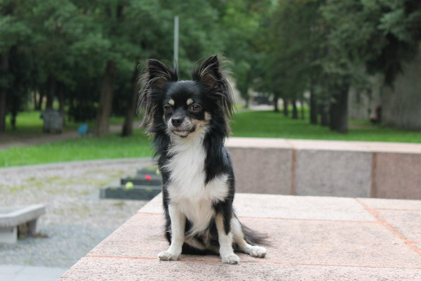 Красивая собачка на улице