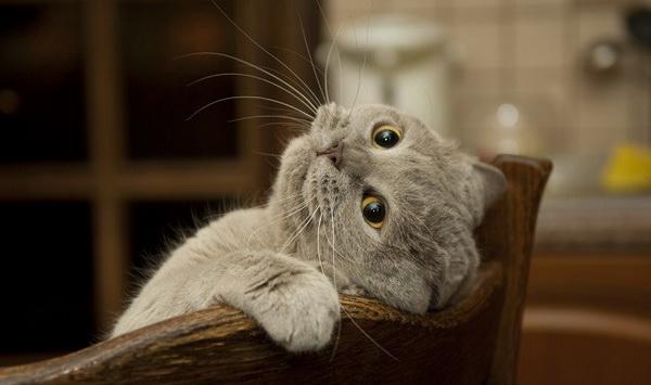 Забавная мордочка котика