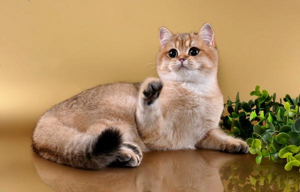 Кошечка красивого окраса