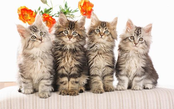 Четыре котенка разного окраса