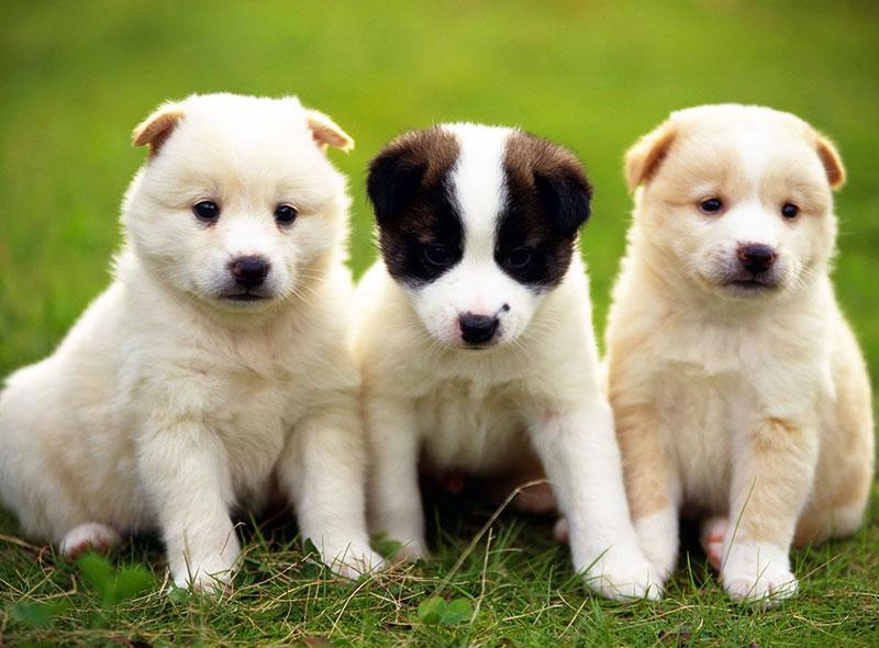 Милые щеночки на лужайке