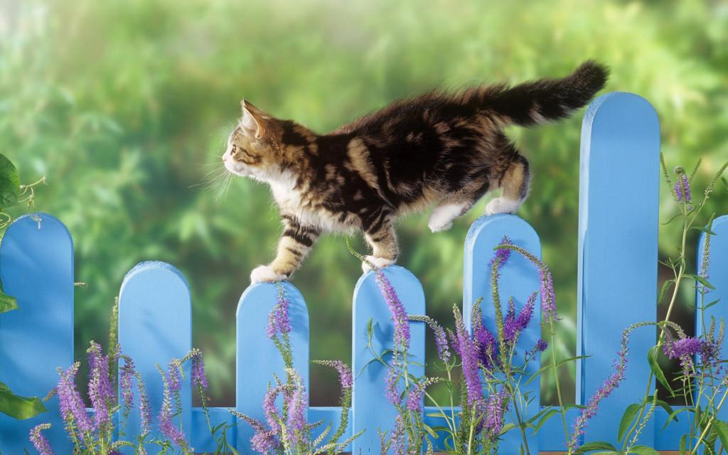 Котик на голубом заборе среди цветов