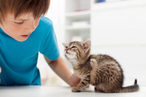 Мальчик смотрит на чешущегося котенка