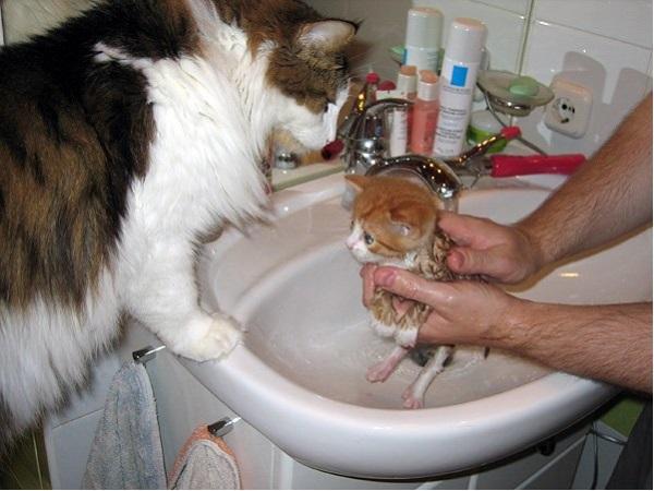Кошка наблюдает за купанием своего малыша