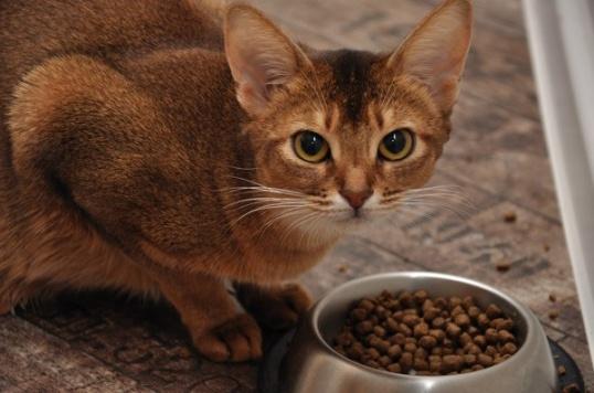 Кошка у полной миски