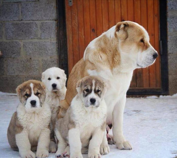 Сука с щенками