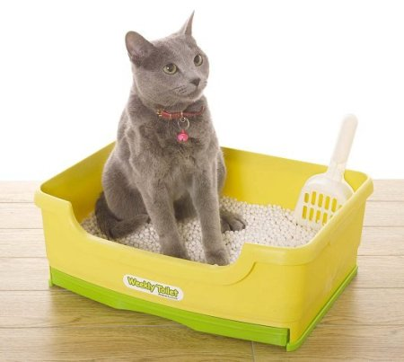 Взрослая кошка в туалете