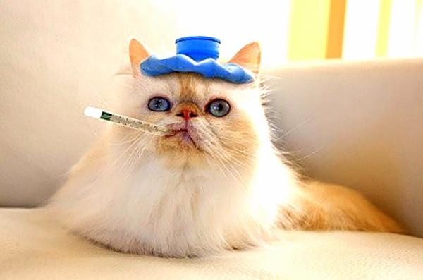 Кот с градусником во рту