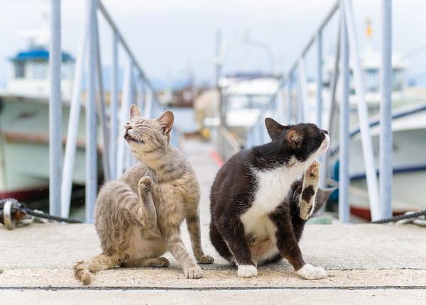 Два котика чешутся на улице