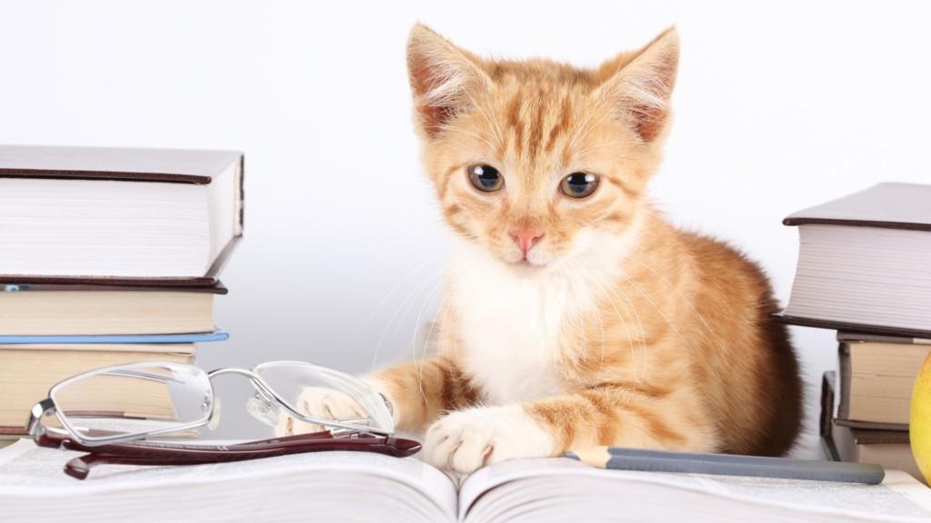 Рыжий кот сидит возле книг