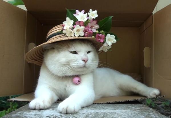 Довольный белый кот в шляпе с цветами