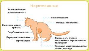 Признак кошачьей болезни МКБ