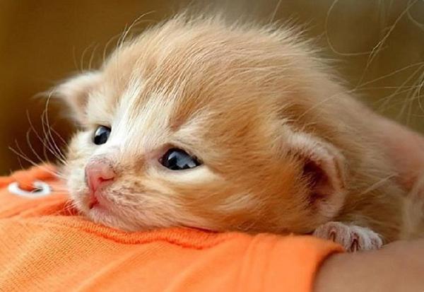 Маленький котенок крупным планом