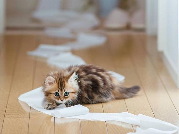 Котик играет с бумагой
