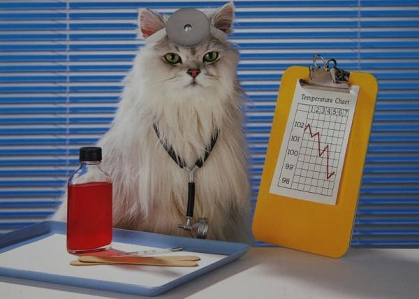 Кошка в форме ветеринарного врача