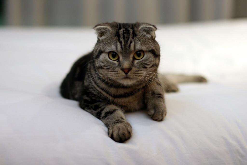 Кот лежит на кровати