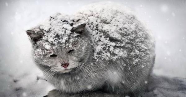 Ознобший котик в снегу