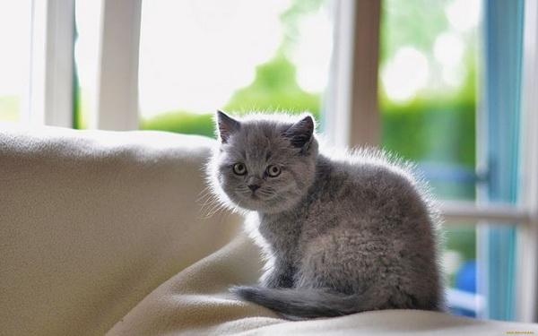 Серый котенок на диване