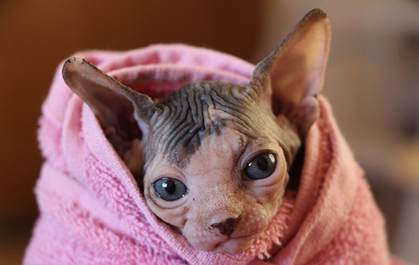 Котенок в полотенце