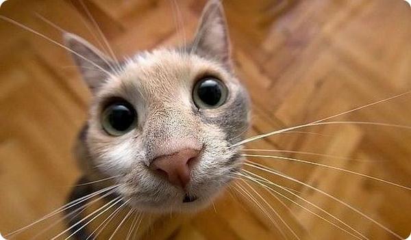 Мордочка котика крупным планом