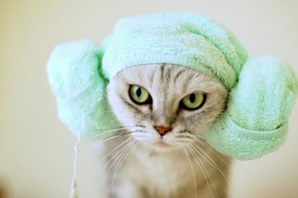 Кошка в зеленом полотенце