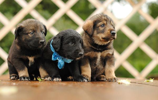 Три забавных щенка