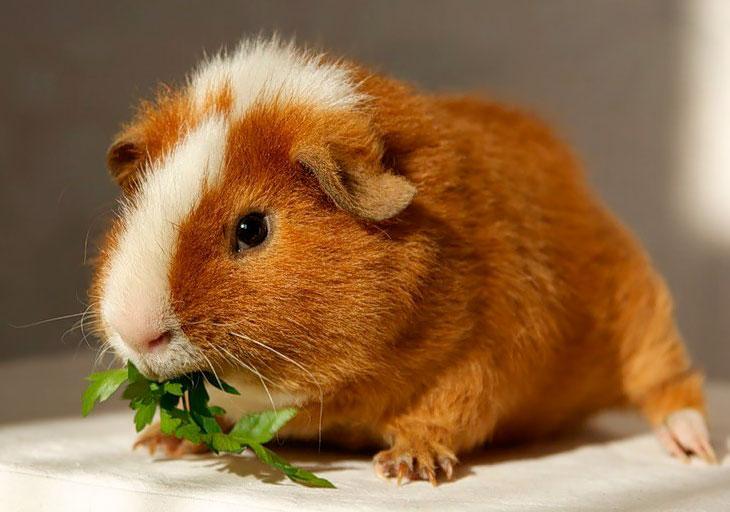 Зверек кушает листики