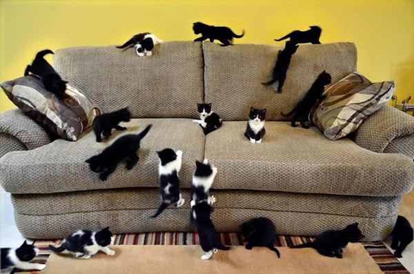 Много котят играют на диване