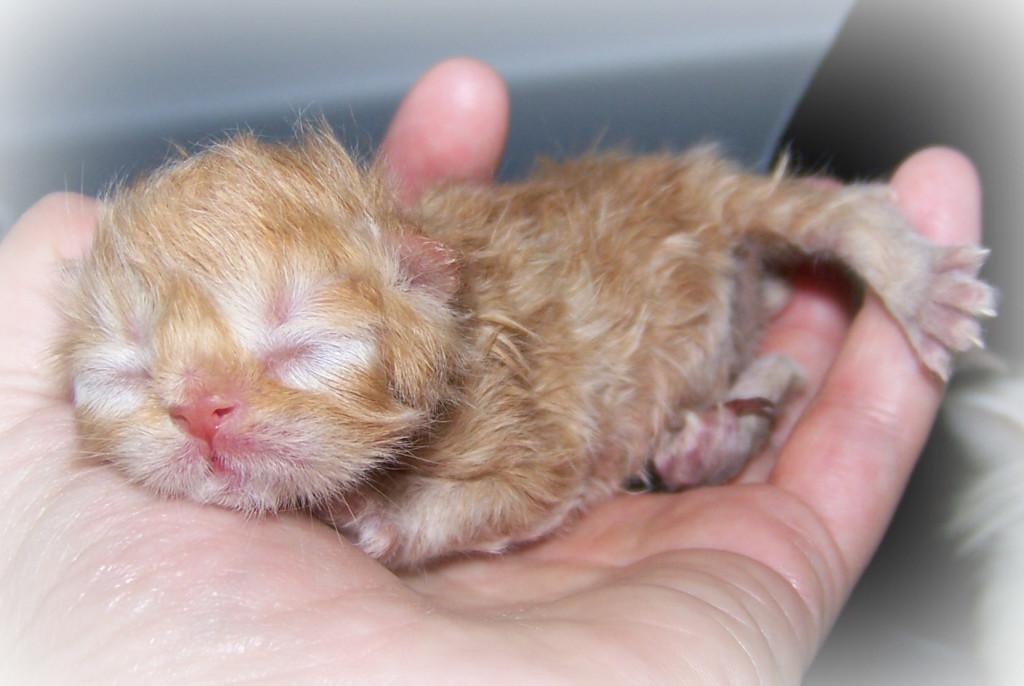 Новорожденный с закрытыми глазами