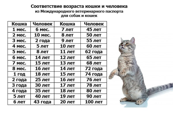 Средняя продолжительность жизни кошек в домашних условиях