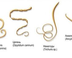 Разновидности гельминтов кошек