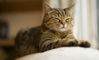 Календарь беременности рассчитать кошки