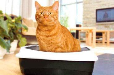 Кот гадит возле лотка