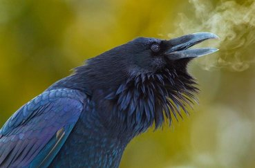 Дыхание ворона