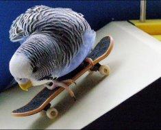 Интересный кадр с попугайчиком