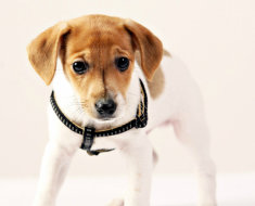 Поводок для щенка