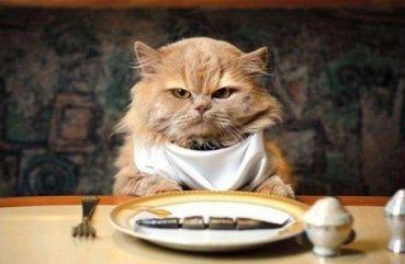 Если кот не ест только пьет причины