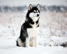 Животное благородно восседает на снегу